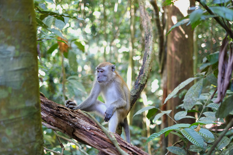 Top 9 Adventure Activities to Experience When You Visit Costa Rica