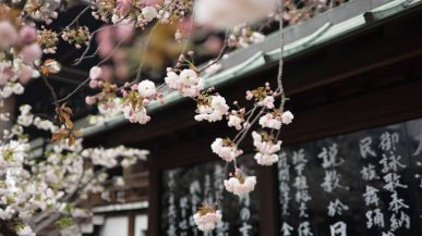 Things to do in Japan over the Rugby World Cup